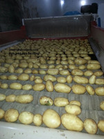 Pakistan Origin Fresh Potatoes