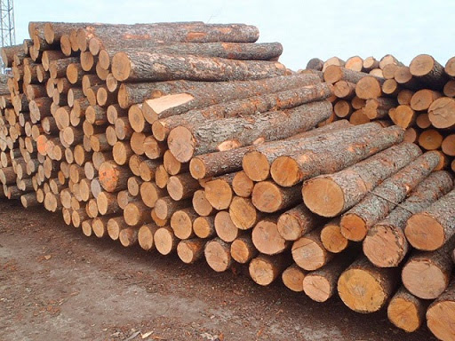 Pachyloba logs & sawn Timber /Pachyloba Logs/Pachyloba Logs Suppliers