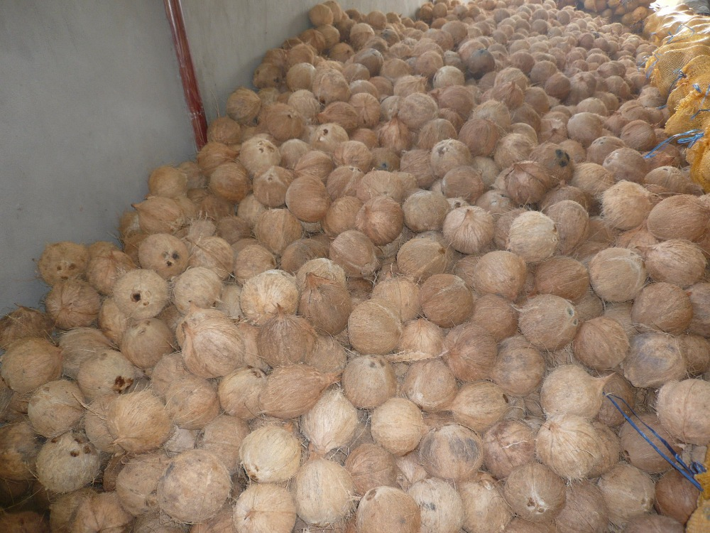 Dried coconut, Dessicated Coconut, Coconut product