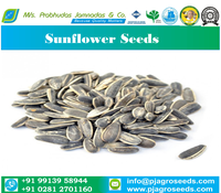 Sortex Cleaned 99% Purity Sunflower Seeds