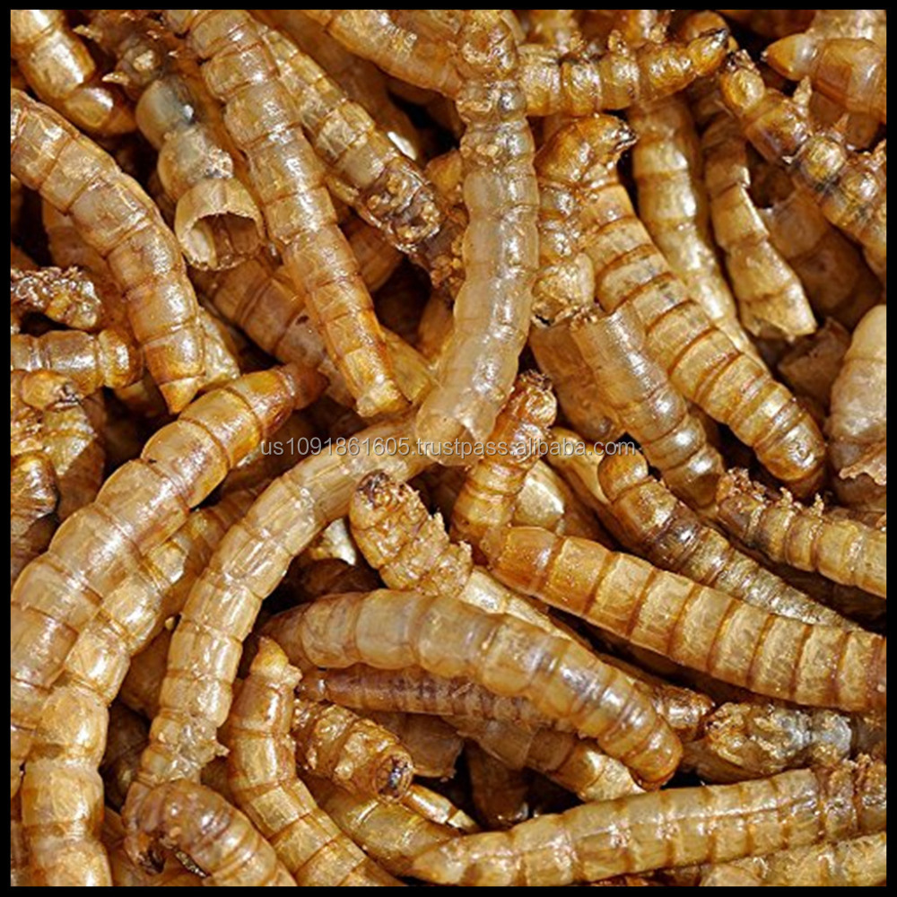 Meal Worms Dried Poultry Feed