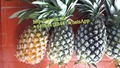 Pineapple High Quality, Best price