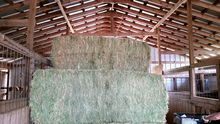 Wheat, Barley, Canary Seeds, Clove Grass, Timothy Hay