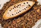 Best Selling Roasted Cocoa Beans Price