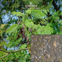 White Khair forestry tree seeds Acacia catechu