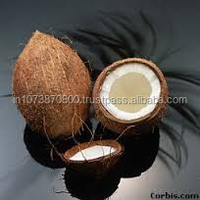 Good Quality Matured coconut export to Canada