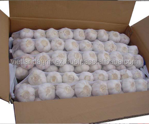GARLIC WITH GOOD PRICE FROM VIETNAM