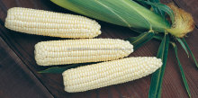 new crop NON-GMO / Organic white maize/corn from Africa