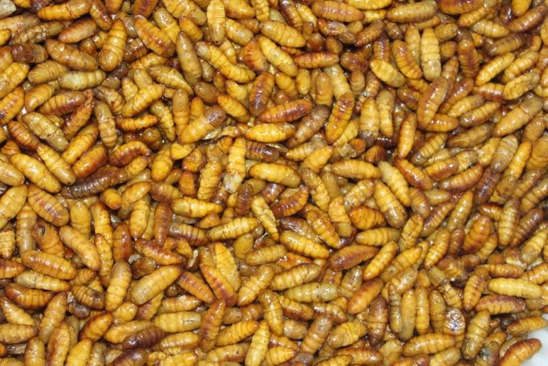 Top Grade Dried Silkworm, Frozen Silkworm Pupae, Discounted price food silkworm on sale