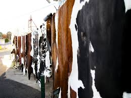 Grade A wet & Dry salted Cow,/Horse/Donkey/Buffalo/Goat Skin and Hides