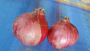 DARK ONION SEEDS