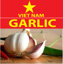Fresh Garlic natural