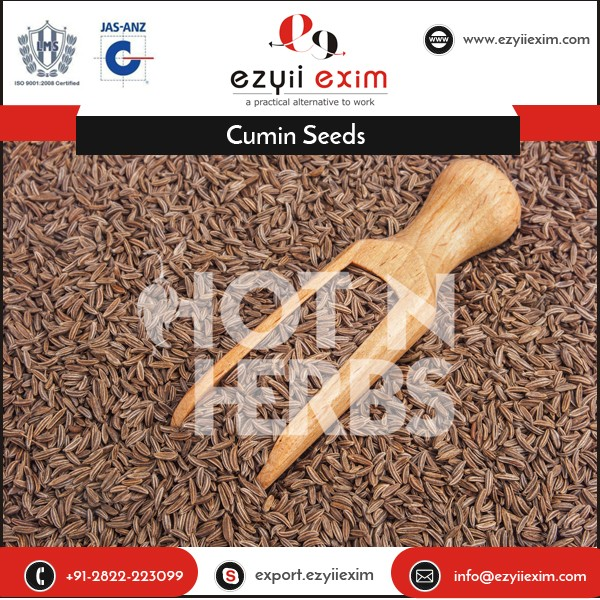 Different Types of Cumin Seeds for Health and Stamina Improving