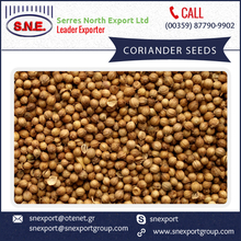 Super Clean Organic Coriander Available at Cheap Price