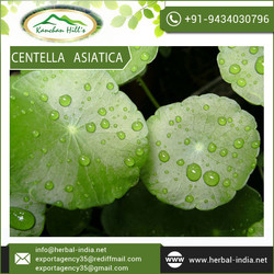 Top Quality Gotu Kola Centella Asiatica Extract Direct from Factory