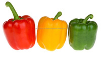 Fresh Red Green And Yellow Capsicum HOT SALES