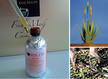 Italian aloe cream: the aloe vera based fresh herbal cosmetics