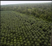 Land for Palm oil