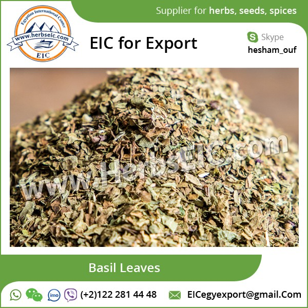 Widely Exported Basil Leaves/ Tulsi Leaves at Low Affordable Price