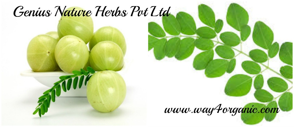 100% Natural Moringa Amla Tablets Manufacturers