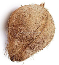 Fresh Brown Semi Husked Coconut at lowest Price