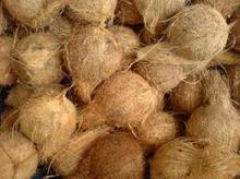 Indian coconut product/ spices / eggs / animal feed / Natural Rubber