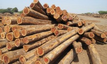 BEST PRICE ACACIA/EUCALYPTUS WOOD LOGS