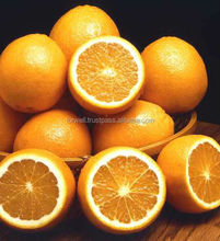 Name all citrus fruits/ orange/fresh orange/list of yellow fruits