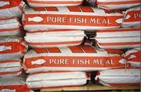 Dried Sea Fish Meal ( Animal feed ) BEST PRICE !