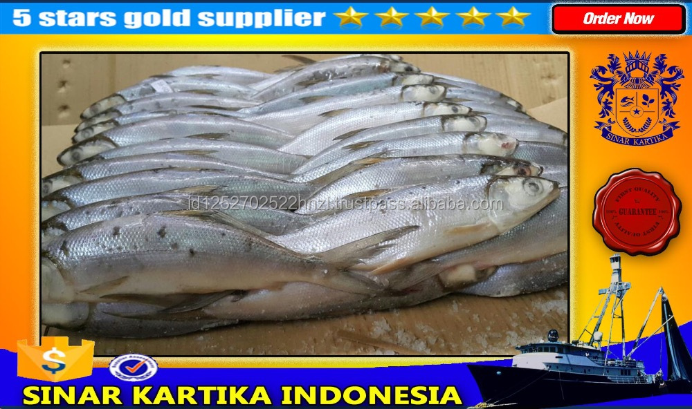 indonesia Milk Fish / milkfish / milk fish / bait milkfish / bait milk fish / good quality milkfish / quality milk fish