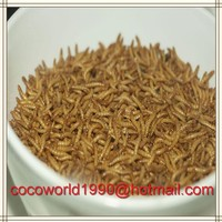 dry pet food/dried mealworms as chicken food