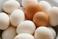 Organic Farm Fresh White and Brown Chicken Table Eggs / Fertile Chicken Hatching eggs Cobb 500