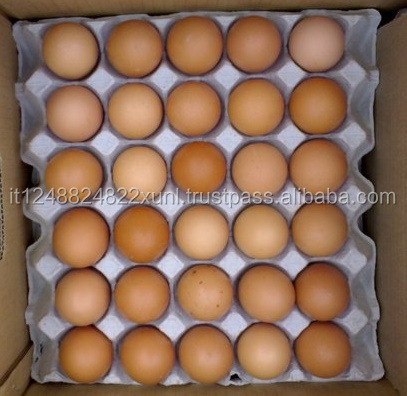 High Grade Fresh table Chicken Table Eggs available