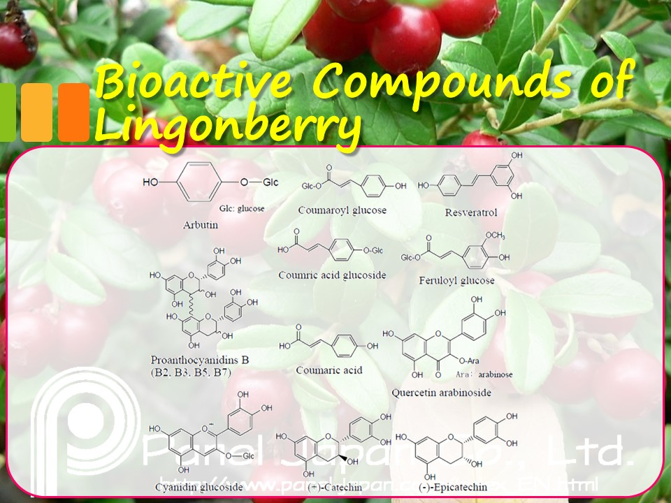 Japanese Lingonberry Extract Powder As Natural Antioxidant For Health Foods And Beverages For Skin Whitening, Skin Lightening