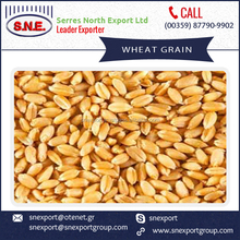 Quality Assured Whole Grain Wheat for Bakery Purpose