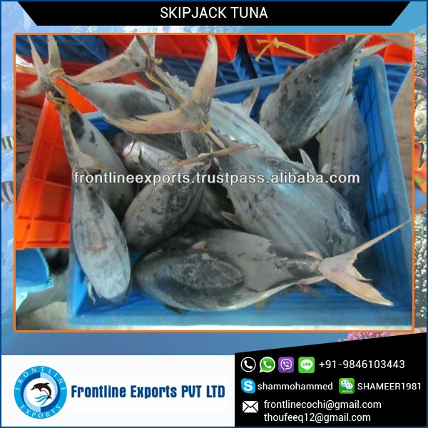 All Varieties of Tuna Fish Available at Low Cost Market Supply