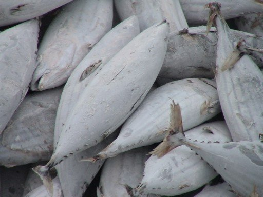 Frozen Skipjack Tuna Fish/Best quality/ competitive price /fast delivery time /wholesale supply.