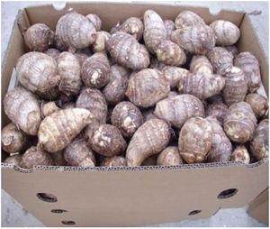 fresh taro root from South Africa