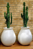 MODERN OUTDOOR TERRACOTA POTS
