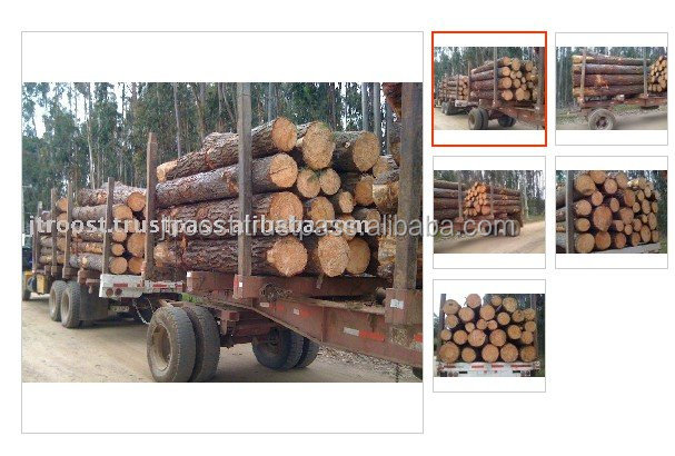 RADIATA PINE PULP WOOD LOGS