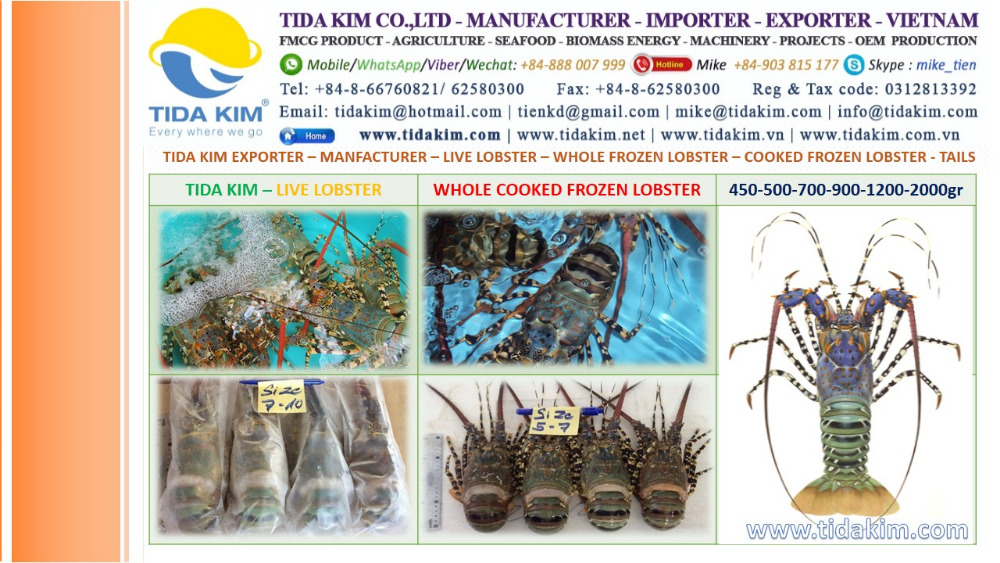 LIVE LOBSTER WHOLE TIDA KIM-FROZEN LOBSTER COOKED FROZEN TAILS VIETNAM ASIA EXPORTER 500 700 900 1200 2000 GR ALL SIZES