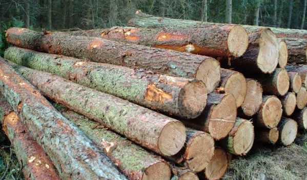 kwila logs for sale