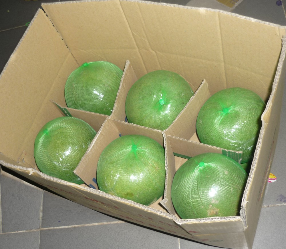 Green Pomelo-high quality for sales and export