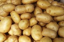 New listing fresh sweet potato halal food for potato