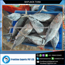 A Grade Long Shelf Life Skipjack Tuna at Lowest Price
