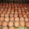 White Brown Fresh Table Chicken Eggs