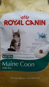Maine Coon Kitten Royal Canin Dry Cats Food