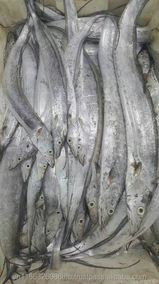 Top Quality Frozen Ribbon Fish - Hilsa fish by a Leading Seafood Exporter