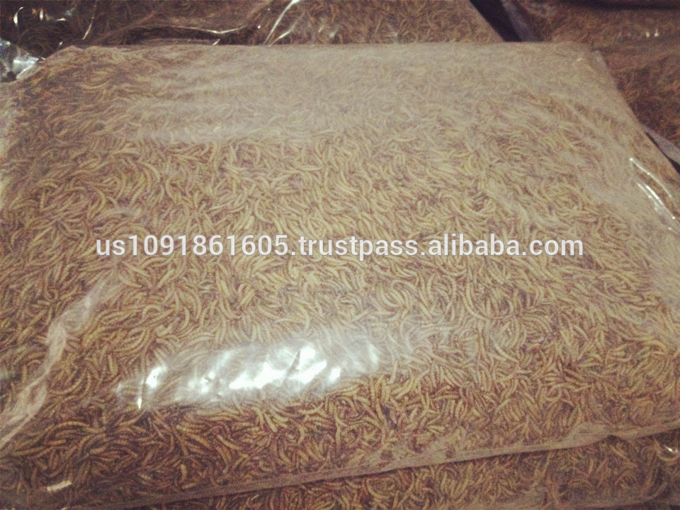 Bulk Dried mealworms Factory wholesale bird feed chicken reptile food