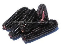 Purple Corn,/Purple maize FOR SALE